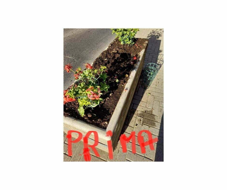 Ladri di fiori_b