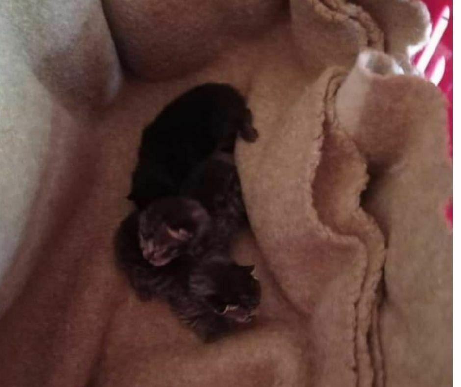 Londa - Abbandono cuccioli
