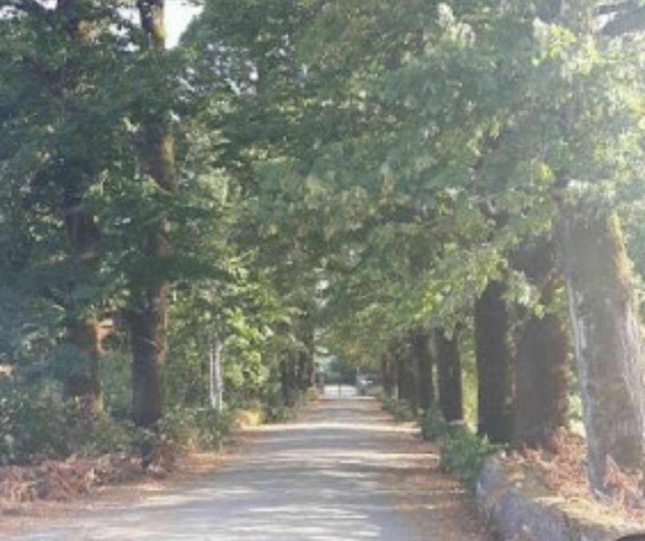 Strada per Villa Martini_b