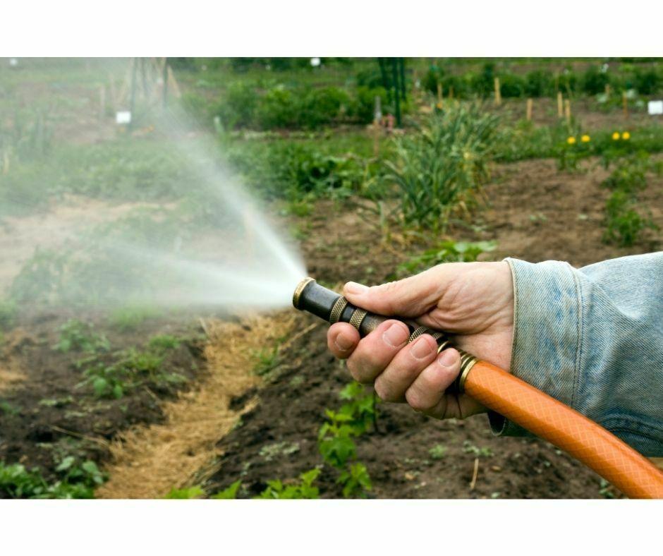 Spreco acqua innaffiamento orto