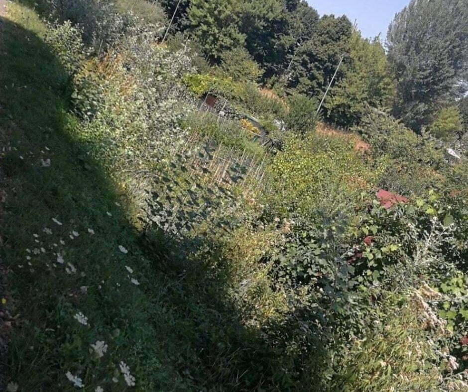 Erba Alta - Borgo San Lorenzo