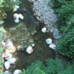 Rifiuti abbandonati (torrente Fistona - Loc. Salaiole)