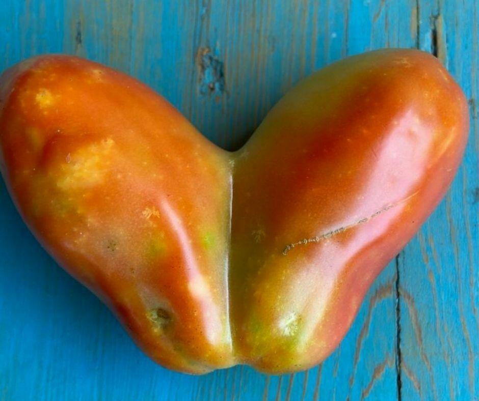 Un cuore di pomodoro