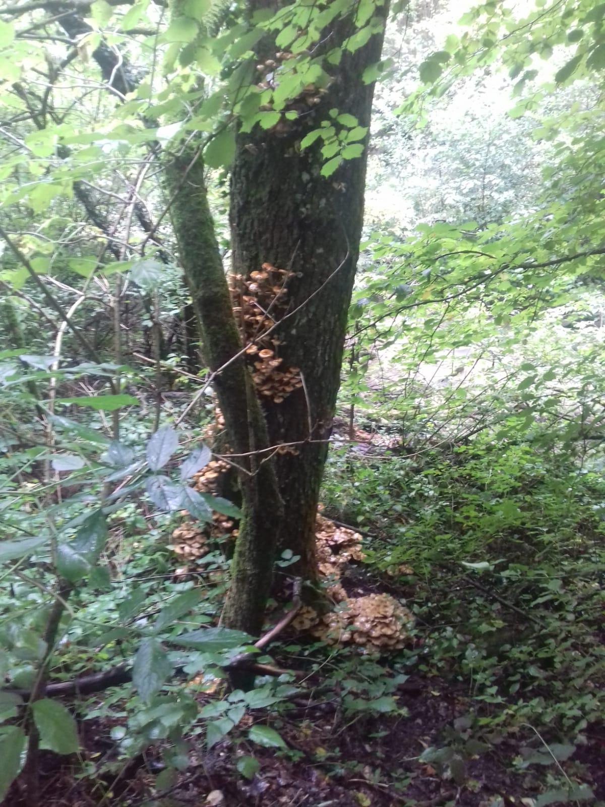 I funghi di Cheoma (2)