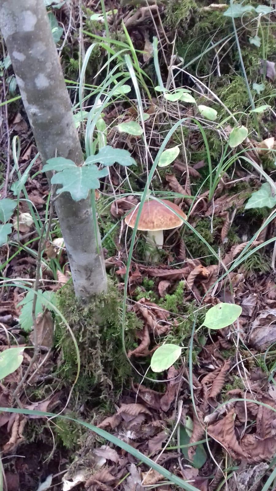 I funghi di Cheoma (3)