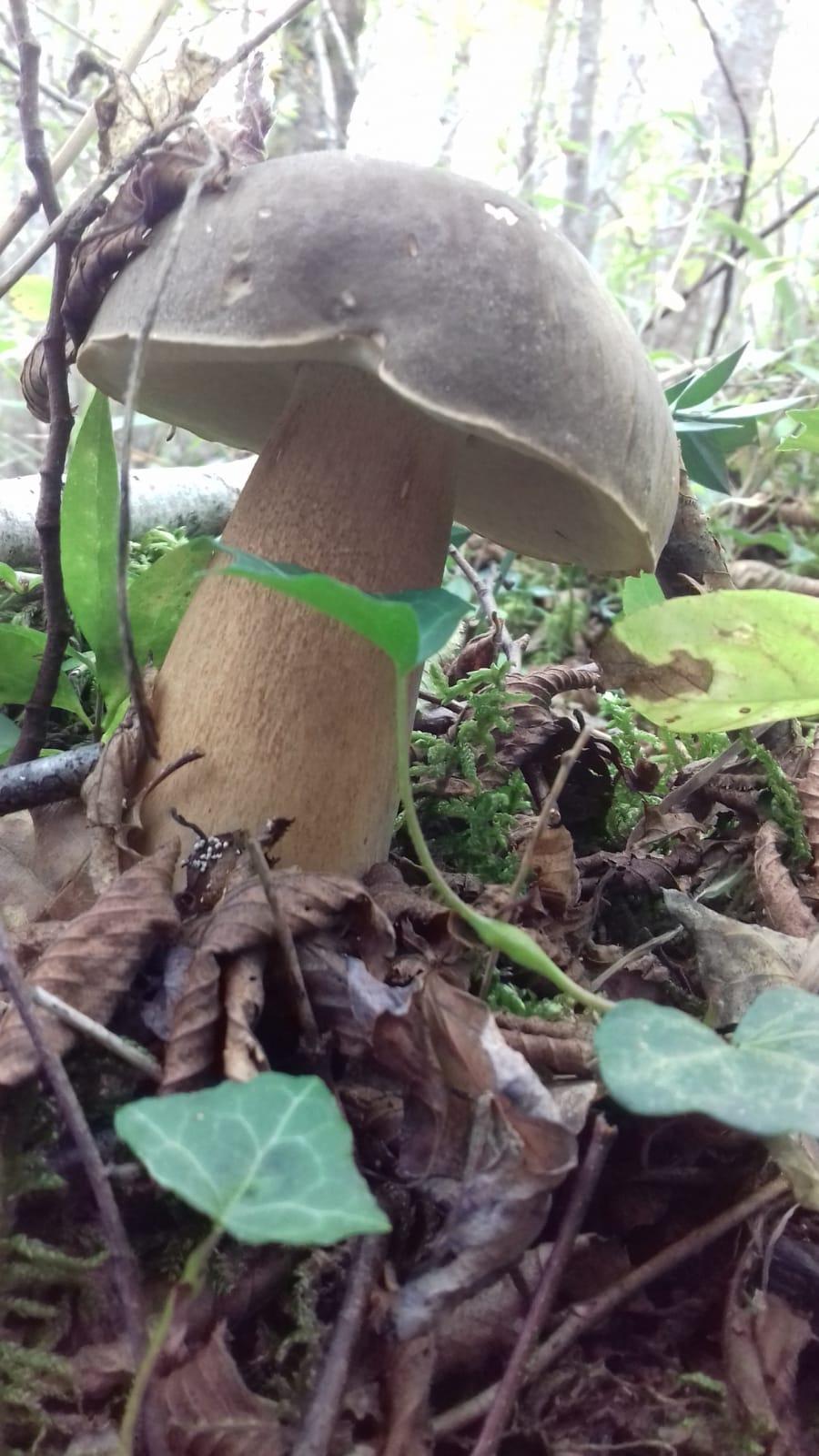 I funghi di Cheoma (4)