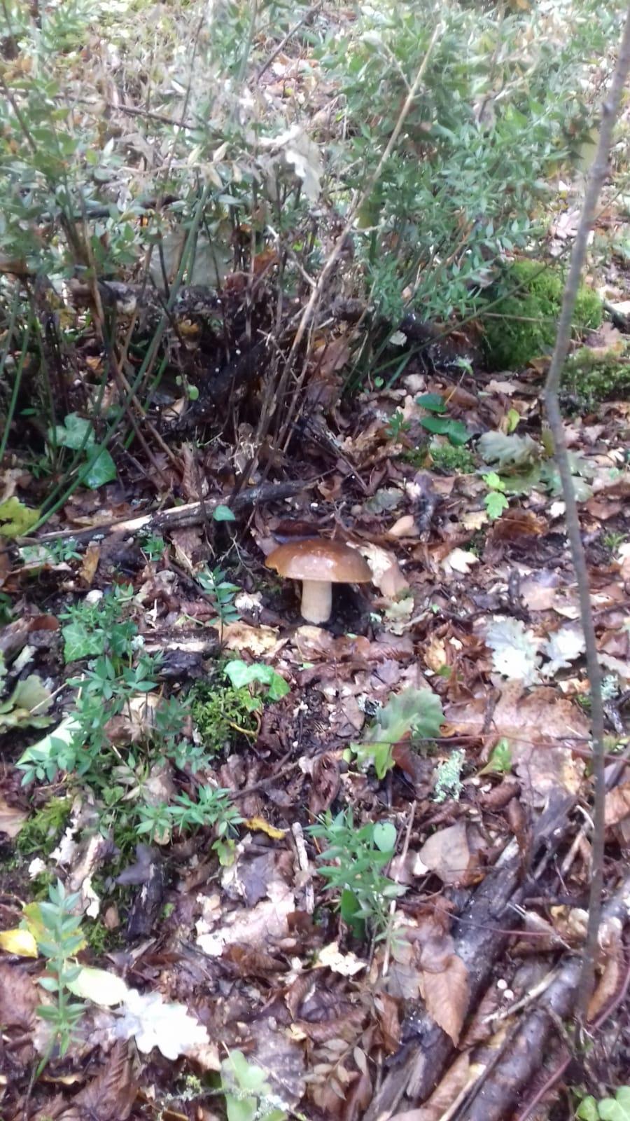 I funghi di Cheoma (7)